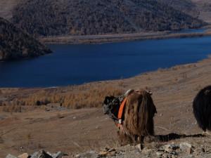 Die Weiten der Mongolei